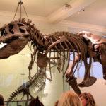 Museu de História Natural Nova York, New York
