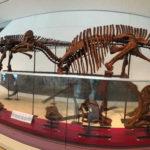 ROM, Royal Ontario Museum, Toronto